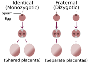 1280px-Identical-fraternal-sperm-egg.svg